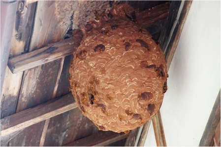 蜂の巣を見つけた時に注意すること